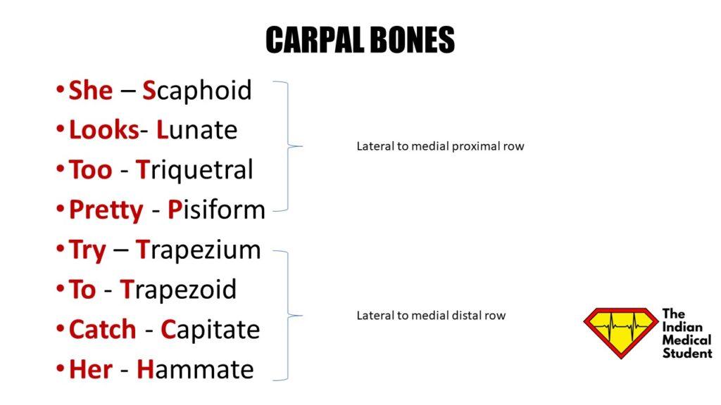 Tarsal bones (mnemonic)   Radiology Reference Article ...